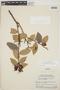Cavendishia bracteata (Ruíz & Pav. ex J. St.-Hil.) Hoerold, PERU, J. J. Wurdack 1622, F