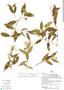 Faramea quinqueflora Poepp. & Endl., H. Beltrán 1402, F