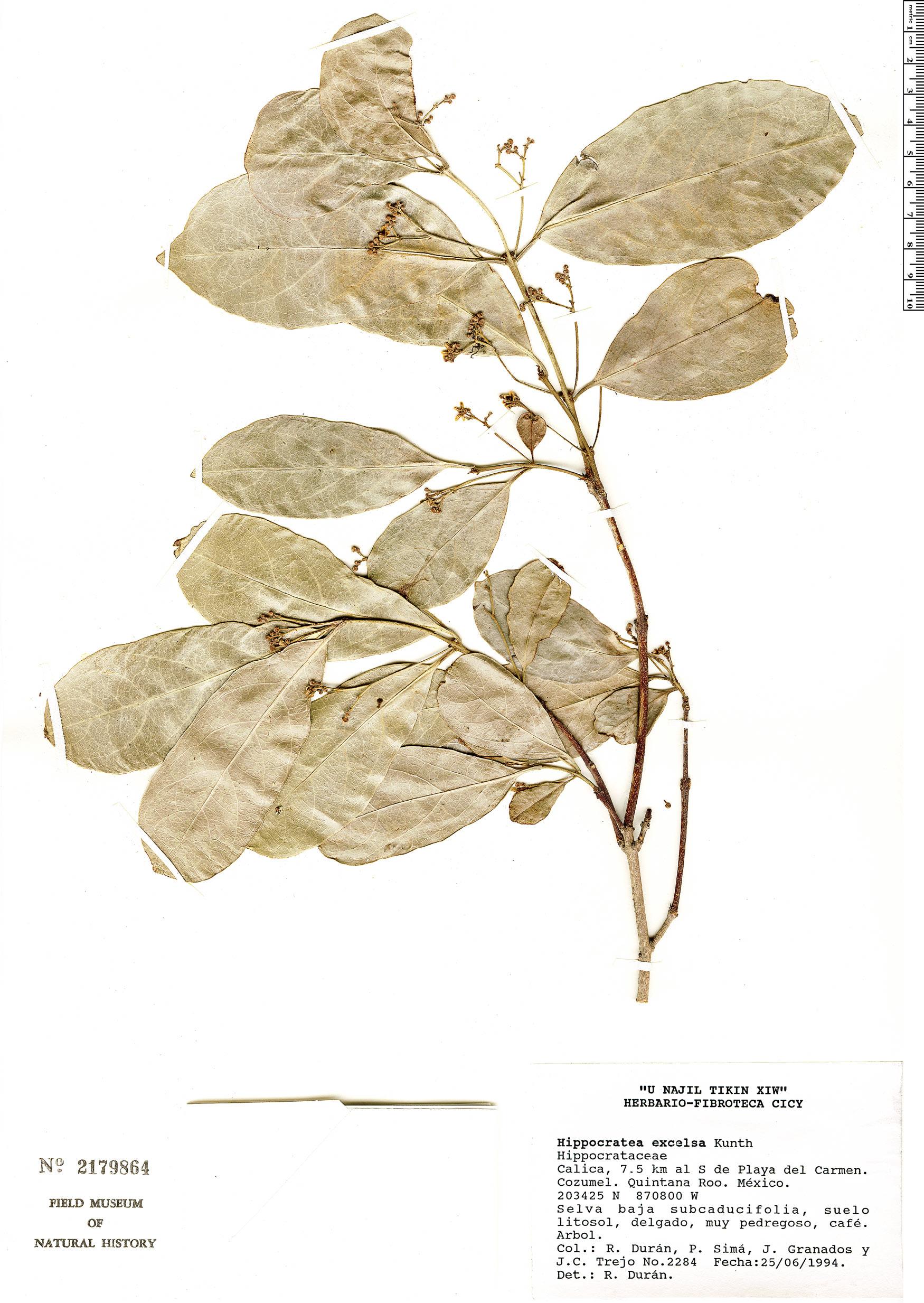 Semialarium image