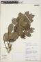 Drypetes amazonica var. peruviana J. F. Macbr., Peru, A. H. Gentry 43359, F