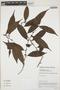 Casearia pitumba Sleumer, Colombia, N. Castaño 4269, F