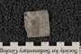 2019 Summer IMLS Ordovician Digitization Project. Crinoid Fossil