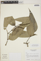 Piper imberbe Trel. & Standl., GUATEMALA, E. Contreras 9051, F
