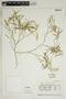 Croton linearis Jacq., U.S.A., K. A. Barringer 757, F