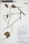 Protium guianense (Aubl.) Marchand, Guyana, P. J. Edwards 2910, F