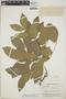 Zygia latifolia var. lasiopus (Benth.) Barneby & J. W. Grimes, British Guiana [Guyana], A. C. Smith 3427, F