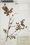 Abarema jupunba (Willd.) Britton & Killip var. jupunba, Bolivia, F