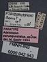 Adelotopus parumpunctatus PT labels