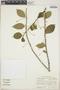 Adelia oaxacana (Müll. Arg.) Hemsl., Mexico, D. E. Breedlove 30292, F