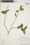 Adelia oaxacana (Müll. Arg.) Hemsl., Mexico, D. A. Neill 5567, F