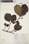 Couma macrocarpa Barb. Rodr., Peru, Ch. Peters 57-84, F