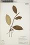 Mesechites mansoanus (A. DC.) Woodson, Brazil, H. S. Irwin 26070, F