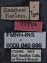 Abacetus brancsiki HT labels