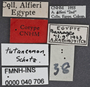 Clivina tutancamon PT labels