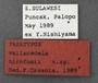 Thopeutica hirofumii PT labels