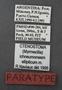 Ctenostoma ichneumoneum ellipticum PT labels