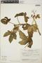 Cnidoscolus urens (L.) Arthur, Mexico, E. J. Lott 1565, F