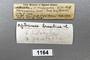 1164 Apterimus brasilius female, type, label