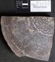 PP 28201 A+B [HS, M] Calamites, Moscovian / Desmoinesian, Francis Creek Shale Member, United States of America, Illinois, Mazon Creek Region