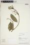 Conostegia montana (Sw.) D. Don ex DC., Ecuador, A. H. Gentry 72753, F