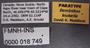 Bembidion louisella PT labels
