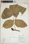 Paullinia L., Peru, I. Huamantupa 15250, F