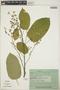 Croton billbergianus Müll. Arg., Costa Rica, J. B. Carpenter 368, F