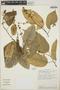 Croton billbergianus Müll. Arg., Costa Rica, C. Kernan 1200, F