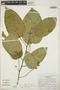 Croton billbergianus Müll. Arg., Costa Rica, N. Zamora V. 766, F