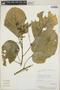 Croton billbergianus Müll. Arg., Costa Rica, E. Bello C. 2272, F