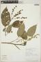 Croton billbergianus Müll. Arg., Costa Rica, G. Carballo 493, F