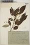 Croton billbergianus Müll. Arg., Costa Rica, Austin Smith 1950, F