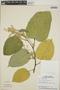 Croton billbergianus Müll. Arg., Panama, T. B. Croat 5835, F