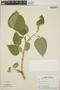 Croton billbergianus Müll. Arg., Panama, T. B. Croat 4638, F