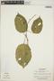 Croton billbergianus Müll. Arg., Panama, J. H. Kirkbride, Jr. 329, F