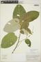 Croton billbergianus Müll. Arg., Mexico, G. L. Webster 15423, F