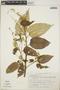 Croton billbergianus Müll. Arg., Mexico, A. Villegas H. 20, F