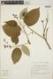 Croton billbergianus Müll. Arg., Mexico, M. H. Nee 24746, F
