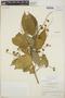 Croton billbergianus Müll. Arg., British Honduras [Belize], P. H. Gentle 8828, F