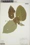 Croton billbergianus Müll. Arg., British Honduras [Belize], J. D. Dwyer 10188, F