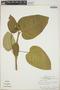 Croton billbergianus Müll. Arg., British Honduras [Belize], J. D. Dwyer 9908, F