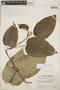 Croton billbergianus Müll. Arg., Guatemala, J. A. Steyermark 45125, F