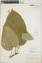Croton billbergianus Müll. Arg., Guatemala, E. Contreras 9880, F