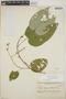 Croton billbergianus Müll. Arg., Honduras, T. G. Yuncker 4516, F