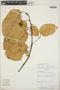 Croton billbergianus Müll. Arg., Nicaragua, J. C. Sandino 4568, F