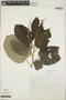 Croton billbergianus Müll. Arg., Mexico, G. Martínez Calderón 1730, F