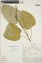 Croton billbergianus Müll. Arg., Guatemala, W. E. Harmon 2559, F