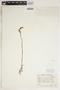Spiranthes cernua (L.) Rich., U.S.A., J. A. Steyermark 9911, F