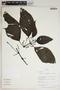 Justicia secundiflora (Ruíz & Pav.) M. Vahl, Peru, R. B. Foster 10038, F