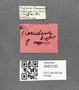 3982330 Acaricoris floridus male, allotype, label